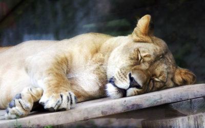 Interessantes und Kurioses Schlafverhalten bei Tieren